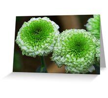 green mum flowers Greeting Card