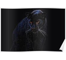 Little Black Jag Poster