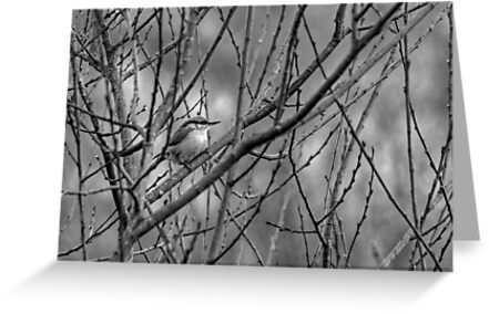 Nuthatch In January by EvilTwin