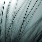 Macro Feather by xbrokendreamsx
