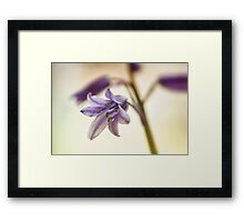 bluebell flower Framed Print