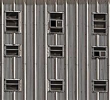 Black Windows by Pene Stevens