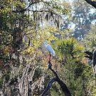 Egret by LightFootsteps