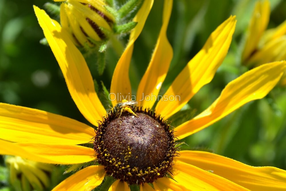 Nectar of the Honey Bee by Olivia Johnson