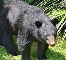 Mama Bear by Olivia Johnson