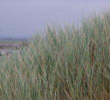Camber Sands to Romney Marsh by seymourpics