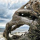 Driftwood  1-  Monmouth Beach, Lyme , Dorset by lynn carter