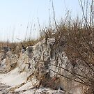 Sand Dune's Edge by LightFootsteps