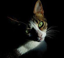 Cat Green Eyes by Silvia Neto