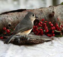 Titmouse at the Pyracantha by Eileen McVey