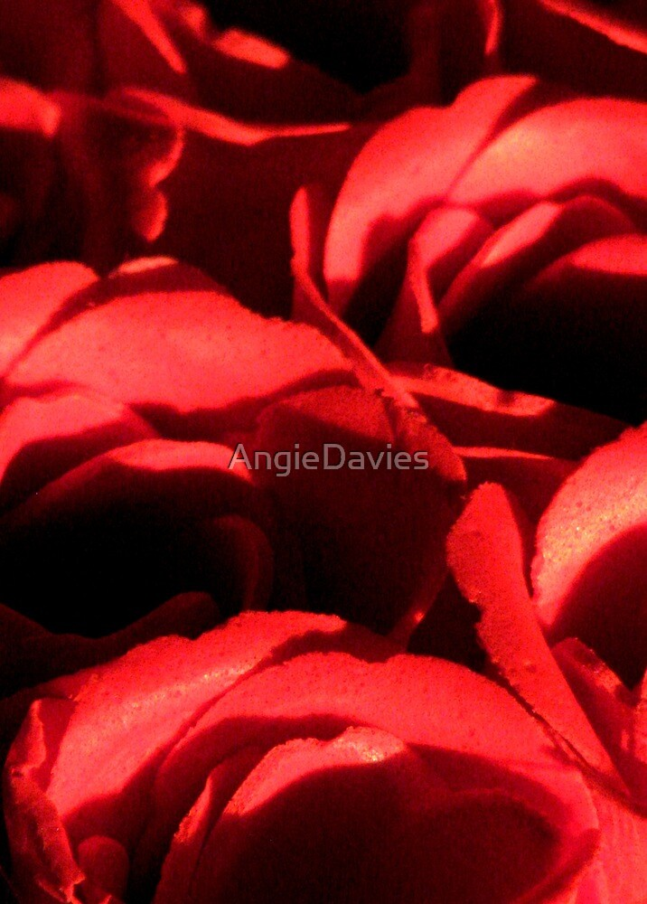 Love and Roses by AngieDavies