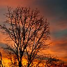 Georgia Sunrise by barnsis