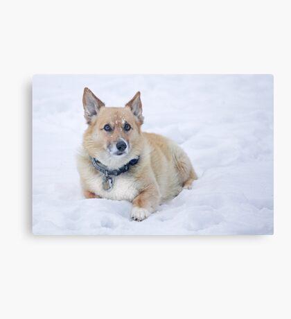"""Enough Snow Pictures Already . . "" Canvas Print"