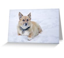 """Enough Snow Pictures Already . . "" Greeting Card"