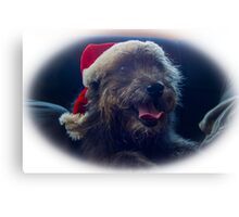 Ami Christmas hat Canvas Print