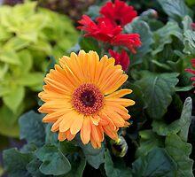 Orange Sun ! by Jocelyne Choquette