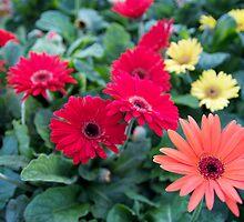 Flowers in Red by Jocelyne Choquette