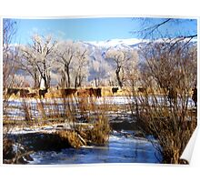 Winter in the Pasture Poster
