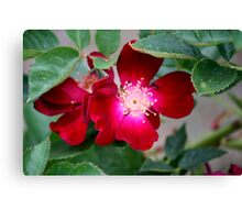 Red Desert Wildflower Canvas Print