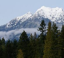 Olympic National Forest January 1st 2013 by Kathleen Hamilton