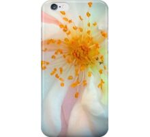 White And Yellow Rose iPhone Case/Skin
