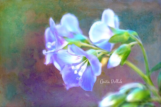 Painted Greek Valerian Blossoms by Anita Pollak