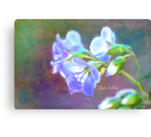 Painted Greek Valerian Blossoms Canvas Print