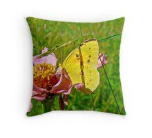 Orange Sulphur Butterfly - Colias eurytheme Throw Pillow