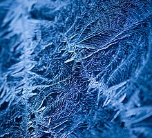 Icy Web. by Sherstin Schwartz