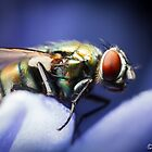 Fly on a flower #2 by Kerrod Sulter