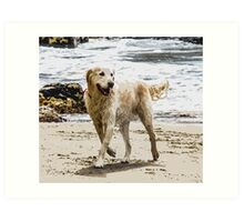 Lockey the Golden Retriever Art Print