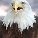 Eagle by Brad Sumner