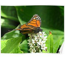 Monarch stopover Poster