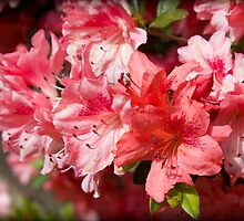 Spring of Azaleas by MsMelStevens