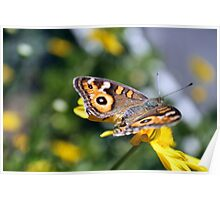 Simply Butterfly Poster