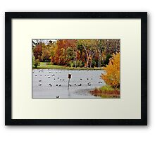Geese and Ducks at the Pond Framed Print
