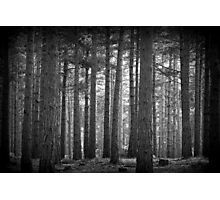 Troll Forest Photographic Print