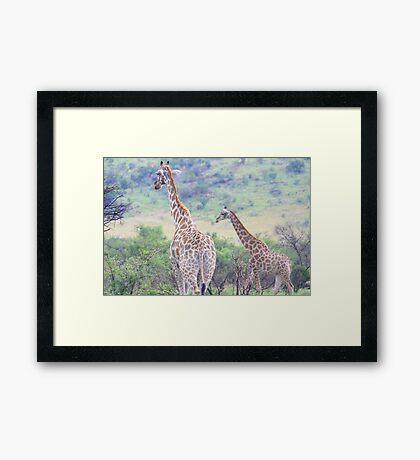 Gentle Giants Framed Print
