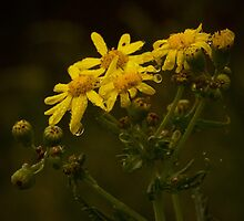Rainy Yellow Flowers by MIchelle Thompson