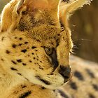 Sweet Serval by AngelaHumphries