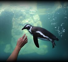 Penguin Play by Tim Holmes