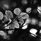 winter leaves by Suzanne Gordan