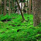 Swedish jungle by Fyrion