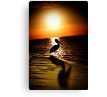 pelican sunrise Canvas Print