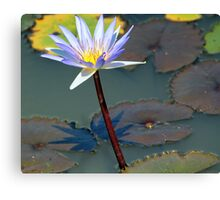 An Exquisite Water Lily Canvas Print