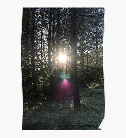 Mountain forest near Loch Fyne, Scotland, UK * Poster