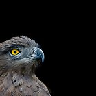 Black-chested Snake Eagle by SamuraiDbn