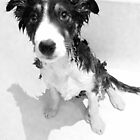 Sad Puppy Eyes by AliLou75
