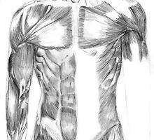 Anatomical Studies - Torso by JessicaLonie