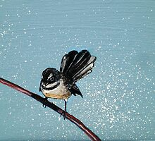 Fantail by Paul Walsh